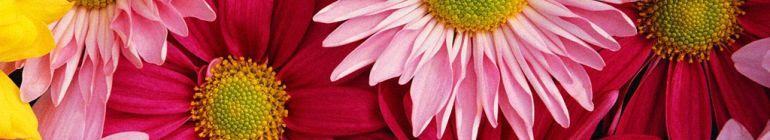 Flower-header